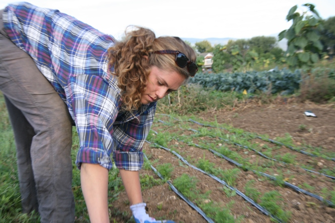 Mel Piazza is a first-year intern at the Farmer Cultivation Center in Niwot, Colorado.